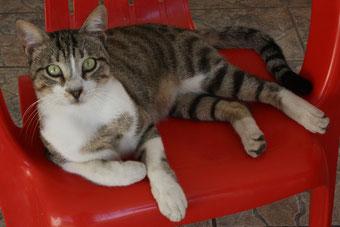 67 Katzen auf Kreta/Cats on Crete