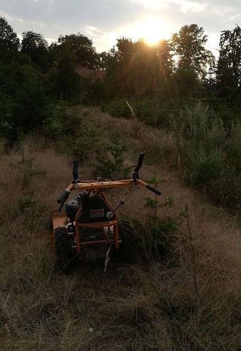 AS-Mäher steht vorm Sonnenuntergang nach der Unkrautbekämpfung in der Tannenbaumplantage