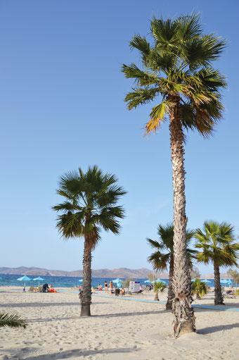 Der Strand des Family Life in Kos. Ein Platz im Schatten einer Palme, der Blick auf nahe Inseln.