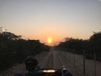 Südafrika ohne Safari: geht nicht!