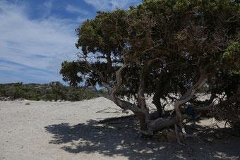 Entspannen im Schatten eines Wacholderbaumes