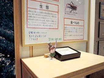 石川県の昆虫~職員イチオシの虫~コーナー