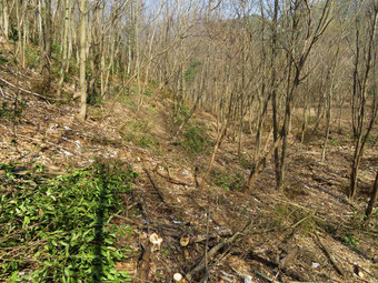 よく見ると常緑低木が皆伐されている。