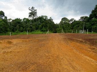 高圧線によりジャングルが分断されている。