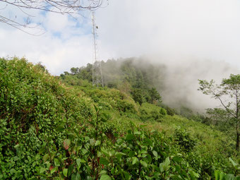 霧のタインギン(10月23日)。