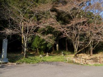 縣神社のサクラは未開花。