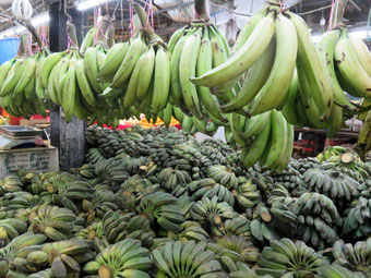 こんな青いバナナは普段あまり見かけない。