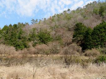 浅谷の発生地のようす(春が浅い)。