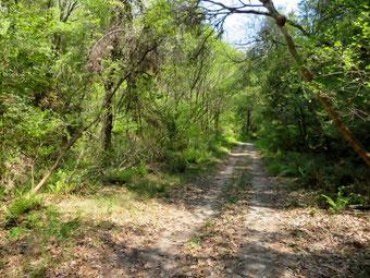 下川口町の林道。