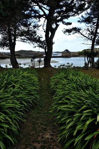 Mathieu Guillochon, photographe, rivages, couleurs, mer, côtes d'armor, bretagne, île de Bréhat, jardin, vert, marée basse