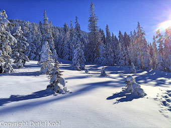 Winterlandschaft, Luzerner Bergwelt, Schnee, Berge, Spuren im Schnee, Sonne+Schnee, blauer Himmel, Abendstimmung, Schnee, Wandern, Märchenwald, Erholen, Geniessen, Relaxen, Ausruhen, Entspannen