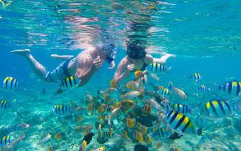 Snorkeling and Diving in Lovina:  Directly at Lovina Reef or as day tour to Menjangan Island at North Bali National Park