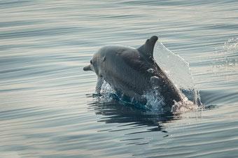 private sunrise dolphin tours with Bali Surya Tours Lovina