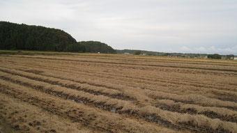 稲刈りが終わった圃場