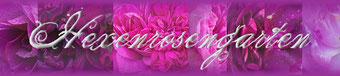 Rosen Rosenblog Hexenrosengarten