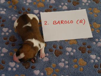 Rüde Barolo