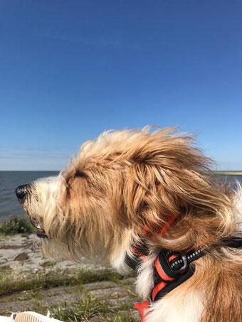 Barolo genießt die Nordsee