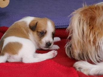 Bruno und Aria