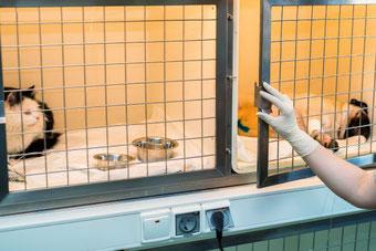 deux cages d'hospitalisation