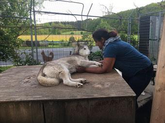 Rudelchefin Ice spricht ernst zur Doghändlerin Nicole