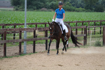 Houding & zit les paard