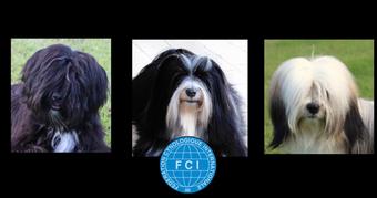 """Tibet Terrier-Zwinger """"Arundhati"""""""