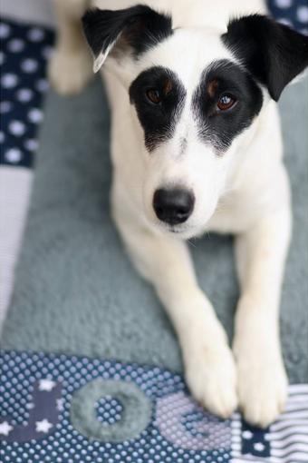 Handmade Hundedecke , das ideale Geschenk für Hundebesitzer