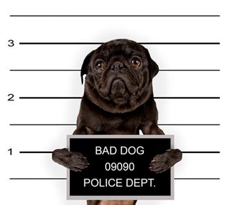Ordnungsamt - Hunde ohne Leine - Strafen