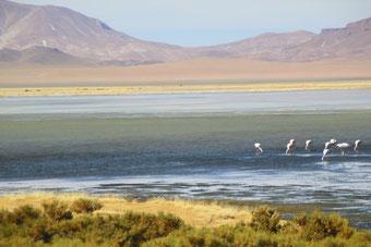 Lagune du Salar de Tara
