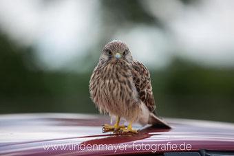 Foto: Lindenmayer Fotografier, www.lindenmayer-fotografie.de
