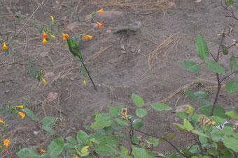 Increíble colibrí en la finca