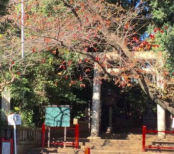 ☆世田谷区六所橋集会所斜め前の六所神社の紅葉がきれいです。