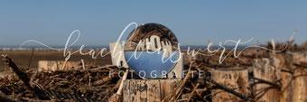 beachtenswert fotografie, Fotokunst, Landschaft, Nordstrand, Fuhlehörn, Vogelschutzgebiet, Nordfriesland, Glaskugel