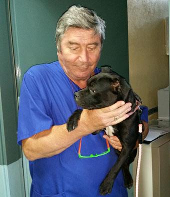 Controllo sulla salute di uno Staffordshire Bull Terrier