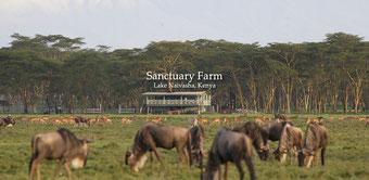 Мой любимый отель в Кении Sanctuary Farm