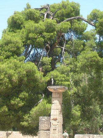antikes Olympia - Peloponnes