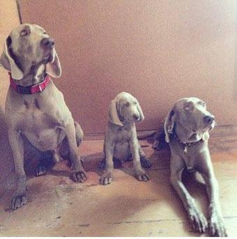 Tētis Bertrams, Kimmijs un vecmāmiņa Esta