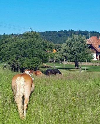 Drei Pferde im Glück