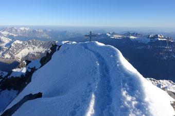 Gross Schärhorn, Skitour, Klausenpass, Chammlialp, Griessgletscher, Chammlilücke, Nordflanke, Gipfelgrat