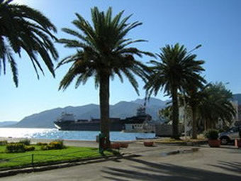 Avenue with palm trees looking at the harbour