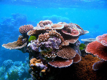 A variety of corals form an outcrop on Flynn Reef, Great Barrier Reef near Cairns, Queensland, Australia. , image: Toby Hudson CC BY-SA 3.0, via Wikimedia Commons