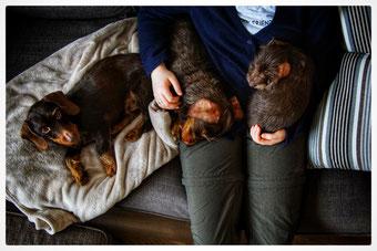 Besonders in der kalten Jahreszeit verbringen wir unsere Abende auf der Couch.