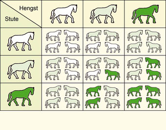 dunkelgrün = Doppelträger (homozygot)    hellgrün = Einfachträger (heterozygot)    weiß = Trägerfrei