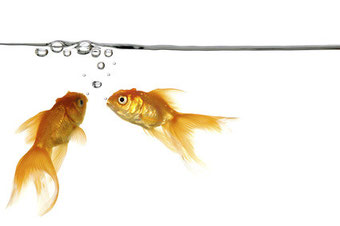 Bildquelle: fotolia.com, waterline and gold fish © Lars Christensen