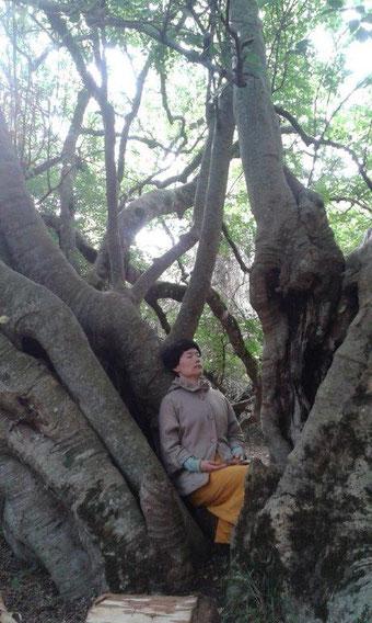 南アフリカ プラットボス ホワイトスティンクウッドの木と