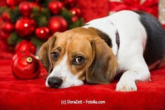 Welches Kind hat davon noch nicht geträumt? Ein süßer Hund als Weihnachtsgeschenk!