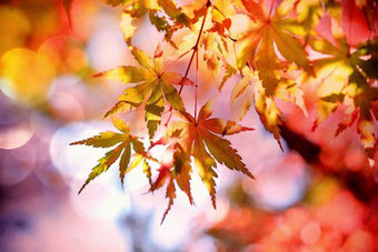 Herbstblätter; 16 Geburtstag Geschenk, 15 Junge; Spaß haben Partyideen