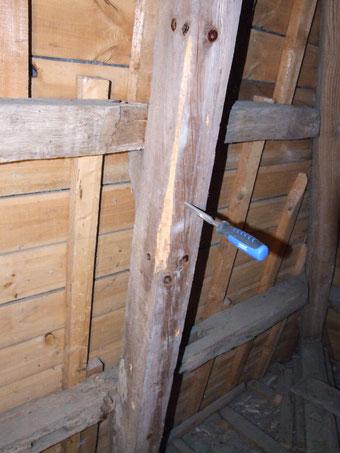 l'investigation approfondie par le travail du bois au ciseau, met à nu les galeries sales (pleines de pourriture), signe des attaques de larves de capricornes.