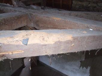 le bois des ouvrages de charpente mis à nu (ici coyers et entraits de fermes) est nettement plus atteint que le bois des ouvrages visibles : les galeries des larves de capricornes sont plus nombreuses