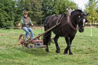 Le cheval de travail